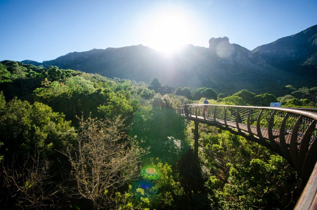 The sun beams over Table Mountain and lights up Kirstenbosch Botanical Garden, as seen from the canopy bridge.