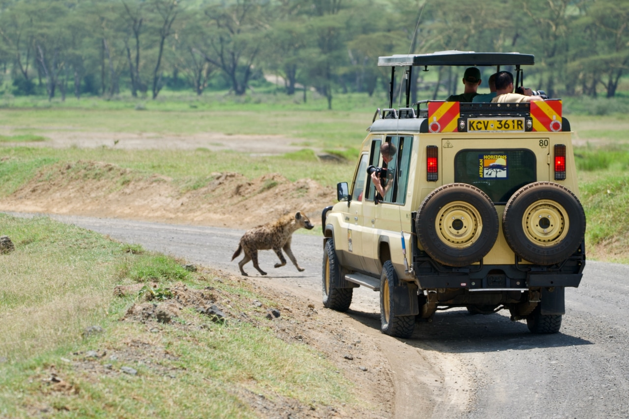 A safari vehicle comes to a stop as a hyena runs out in front of it.