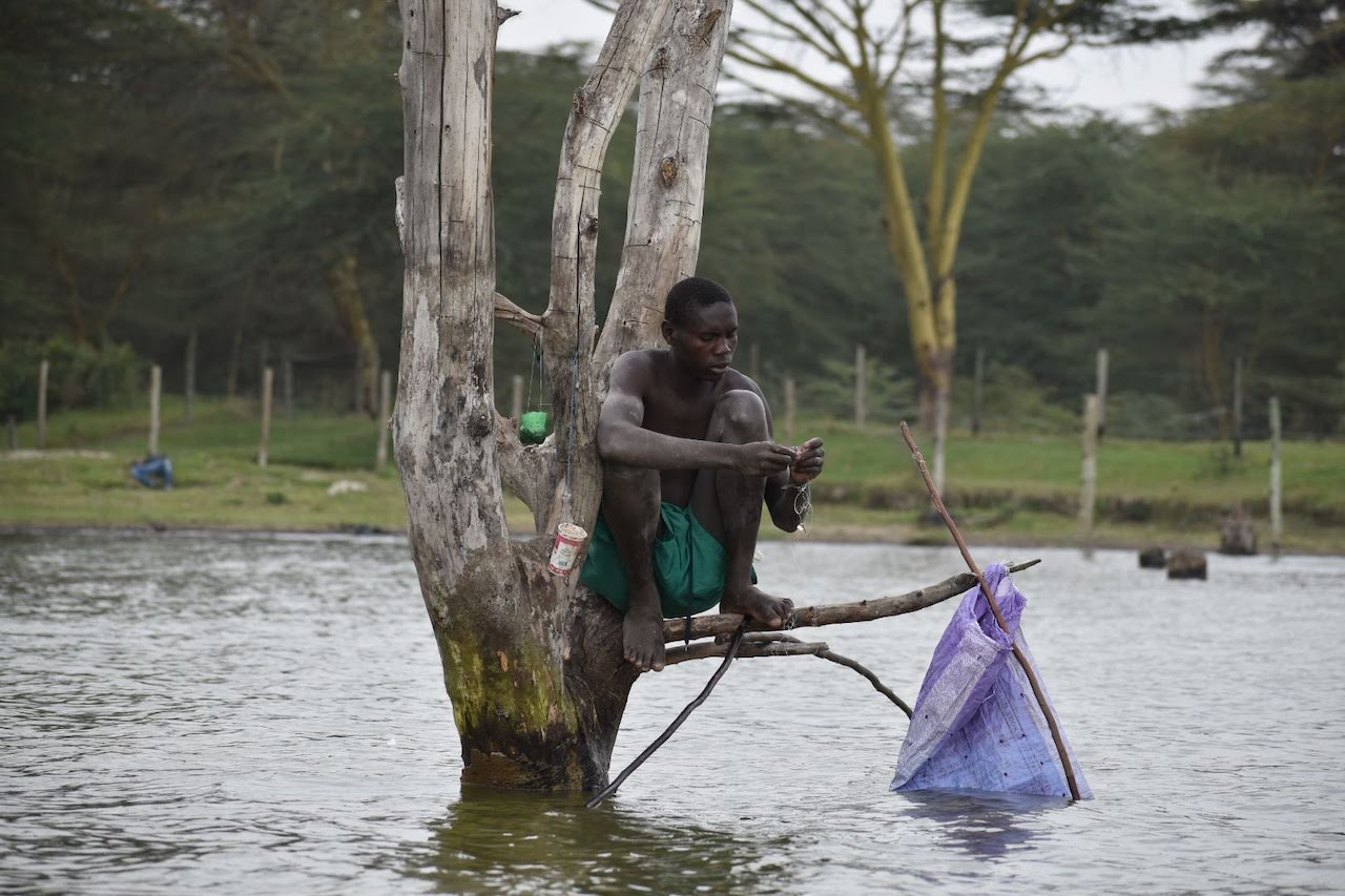 A local Kenyan is seen fishing from the branch of a submerged tree in Lake Nakuru.