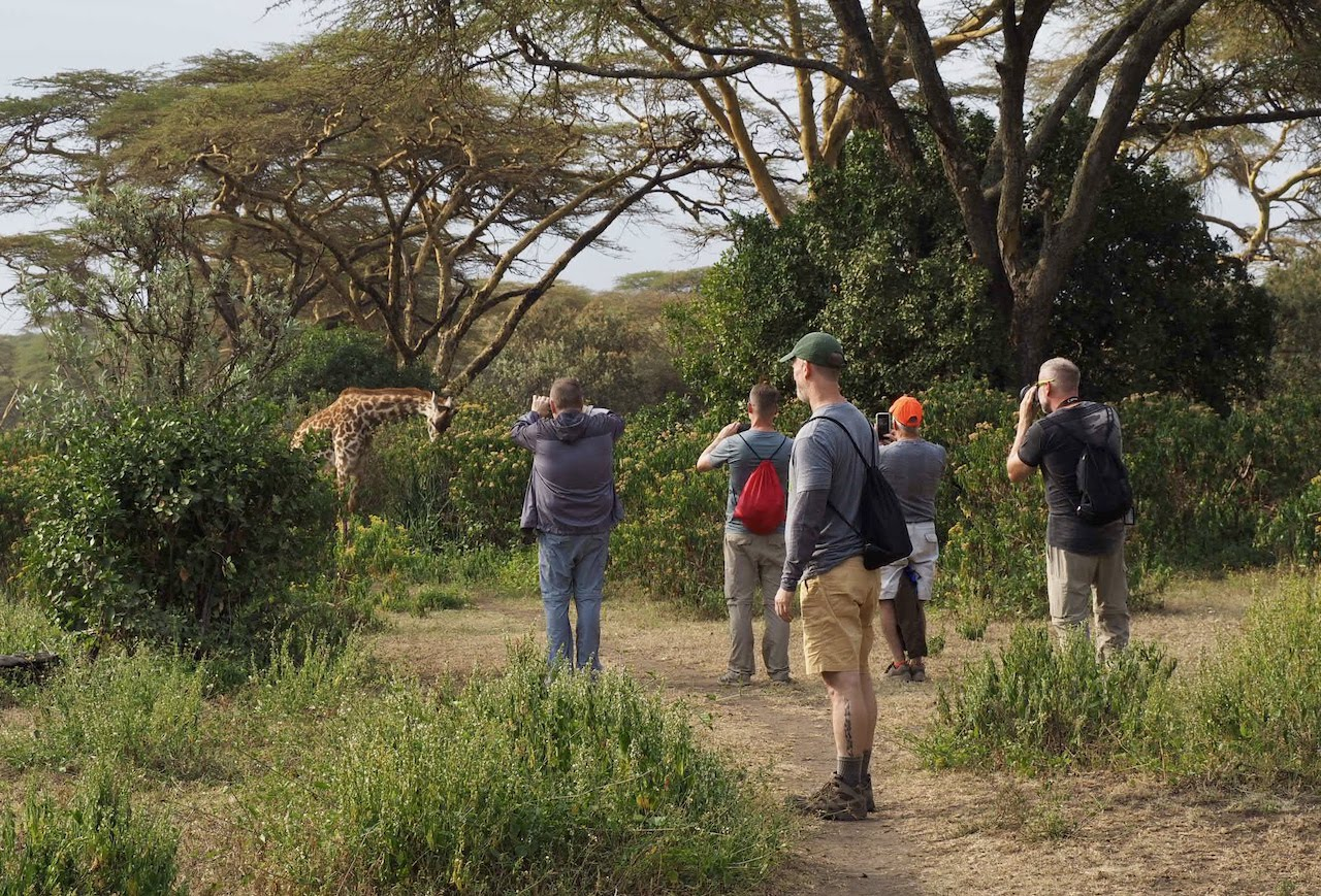 A group of photographers take pictures of a nonchalant giraffe.