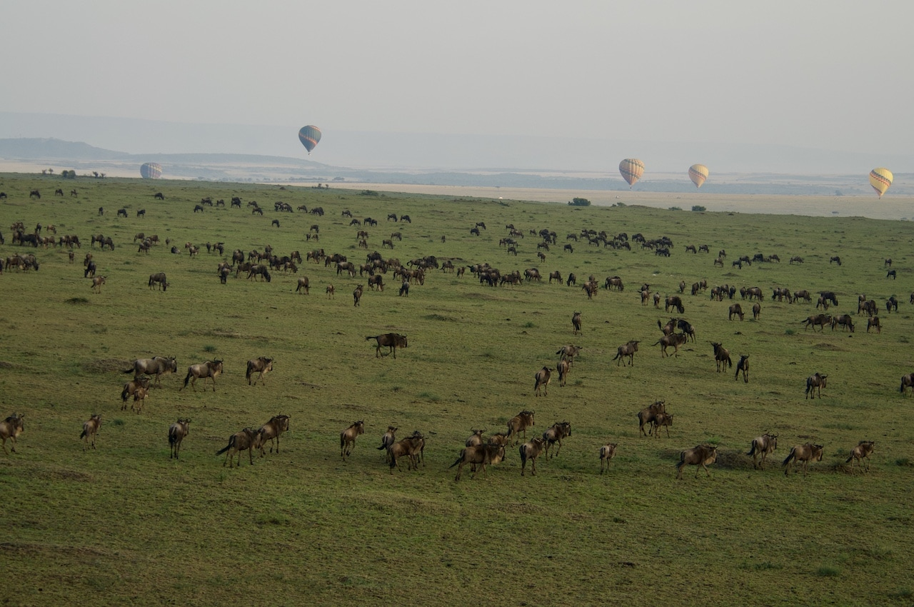 Hot air balloons gently float about the Great Wildebeest Migration in the Masai Mara, Kenya.