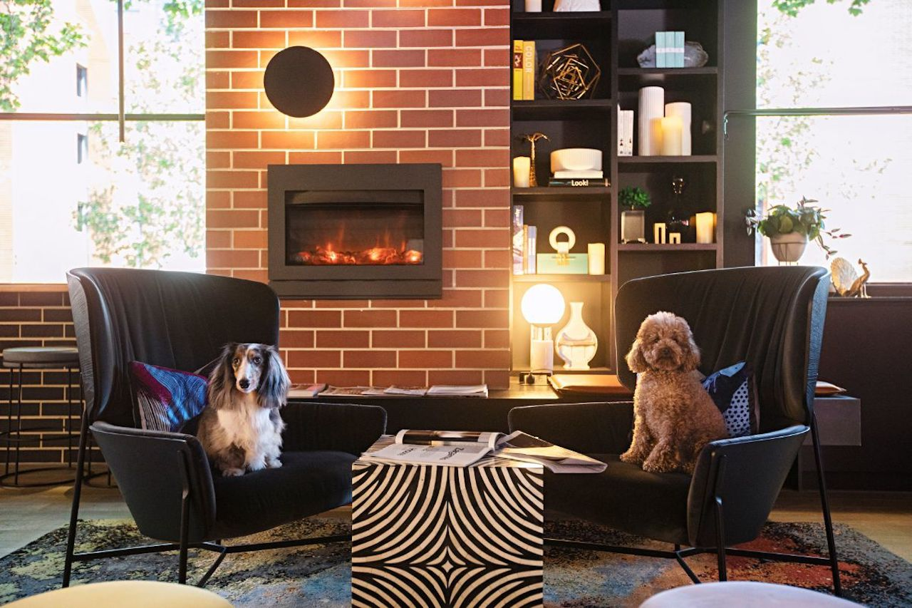 Two dogs sitting in plush chairs in front of a fireplace in Zagme's House.