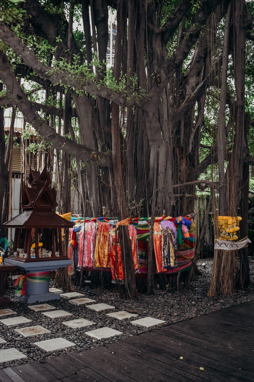 A tropical tree in Thailand is draped in robes and cloths.